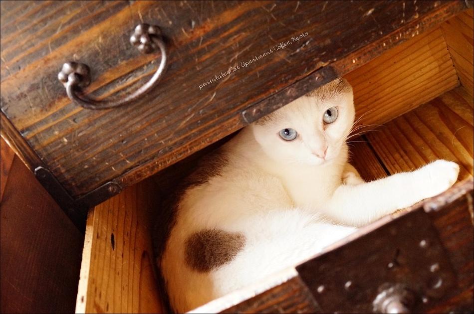 16貓咪2