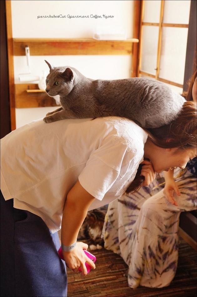 26背貓咪