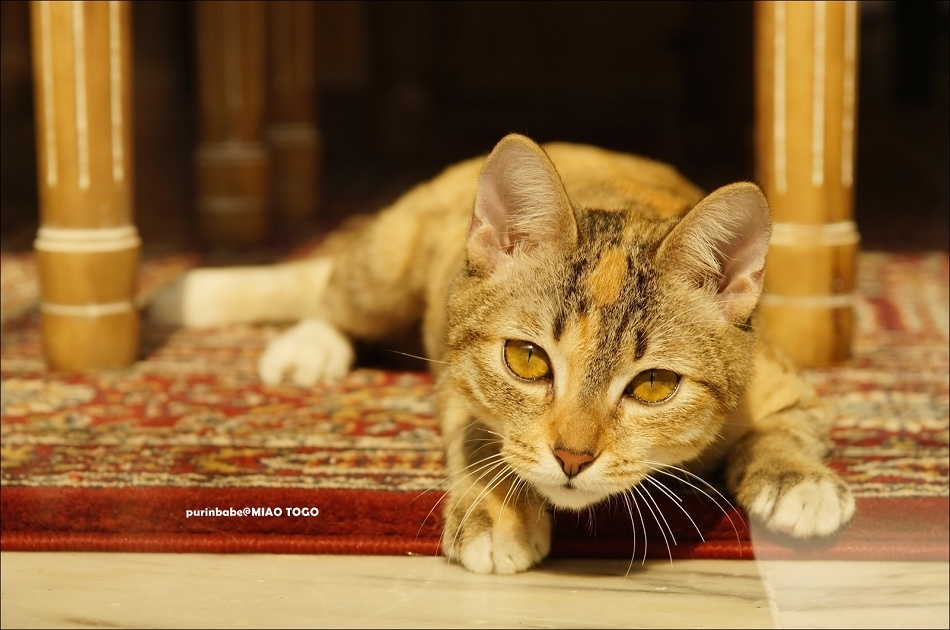 5外帶一隻貓4