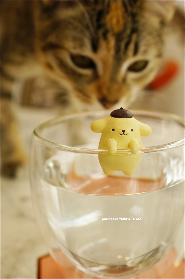 23貓咪喝水1