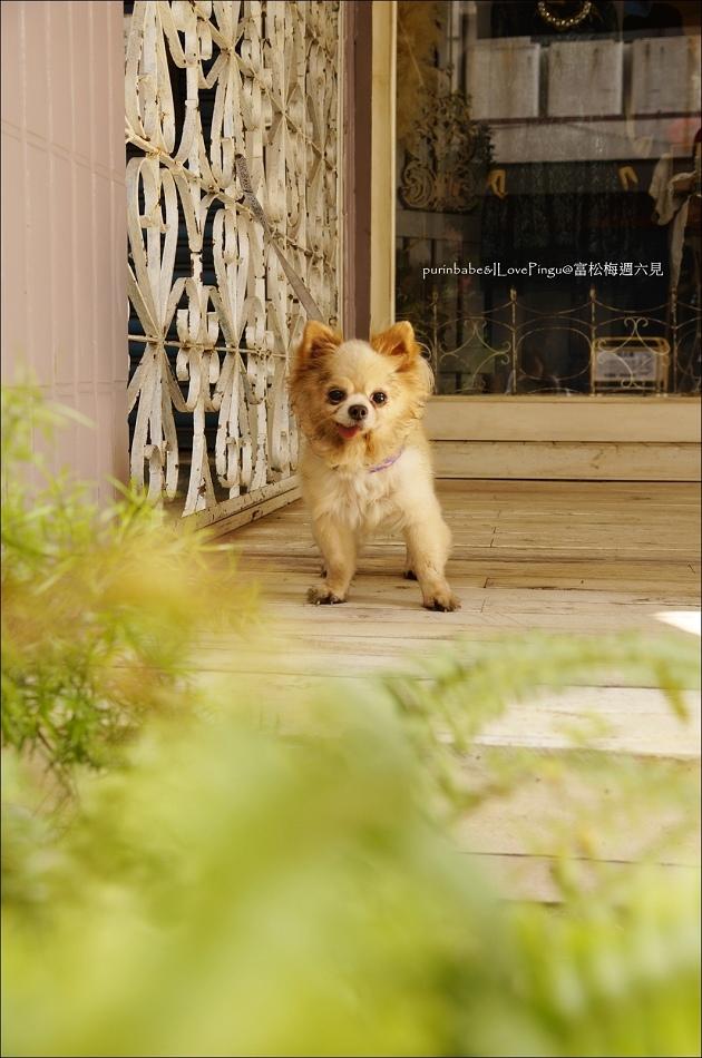 4店狗艾迪