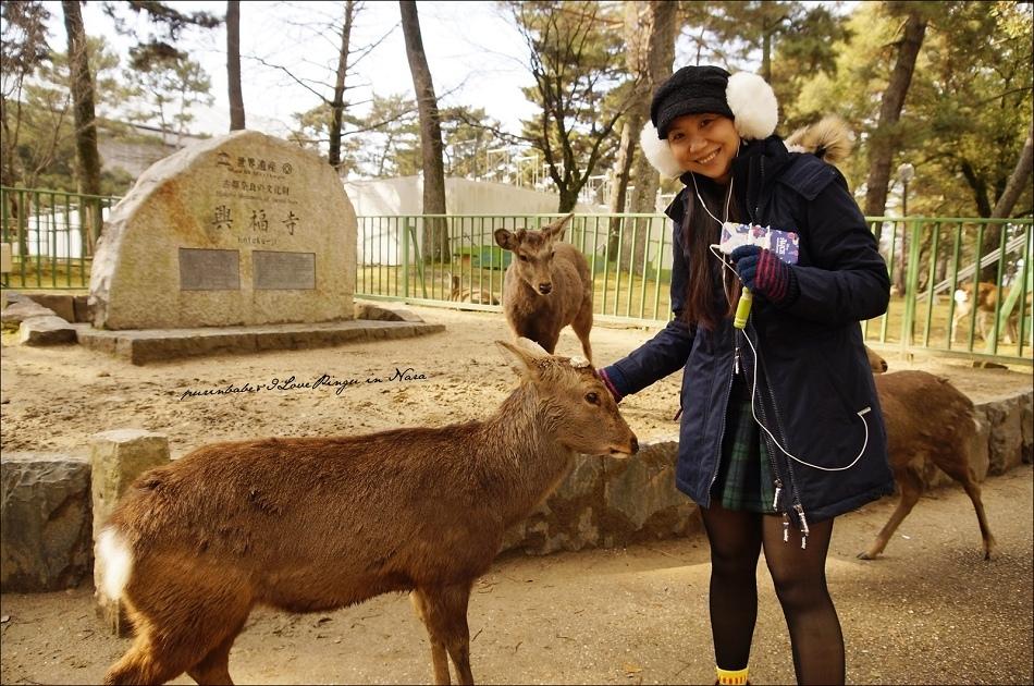 18奈良小鹿