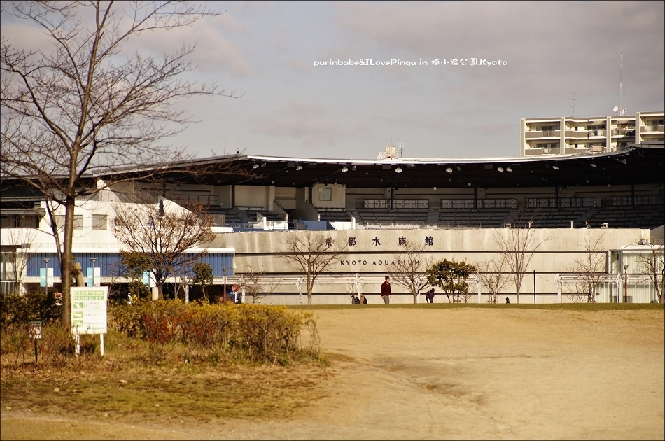 6京都水族館