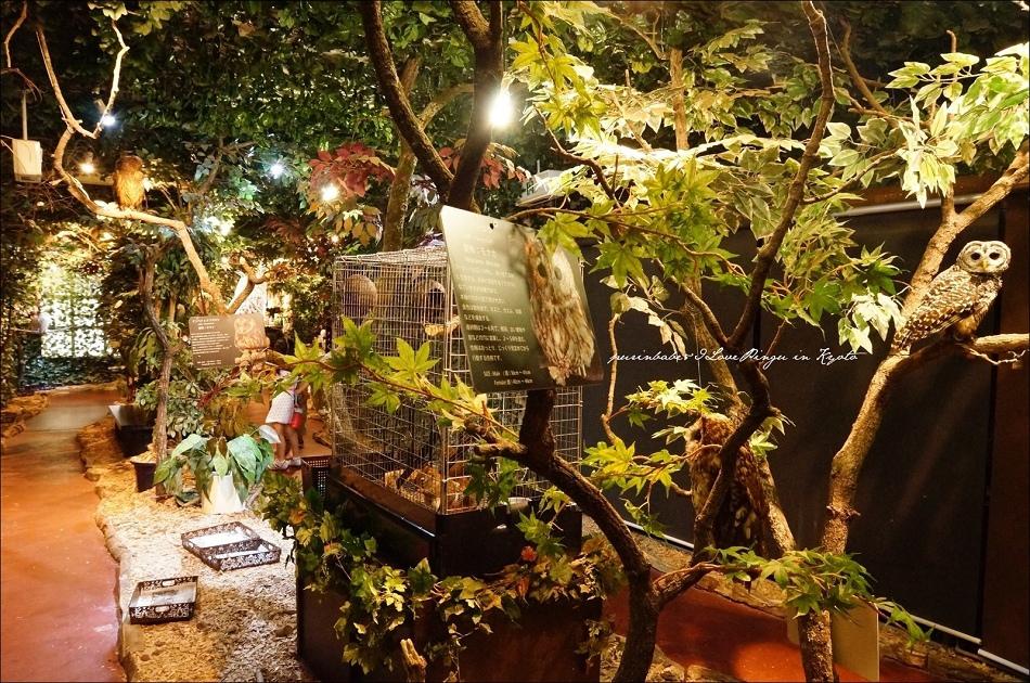 15京都貓頭鷹豹貓森林