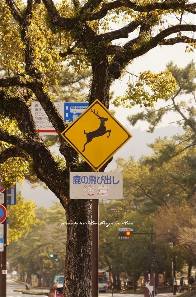 18鹿飛出注意1