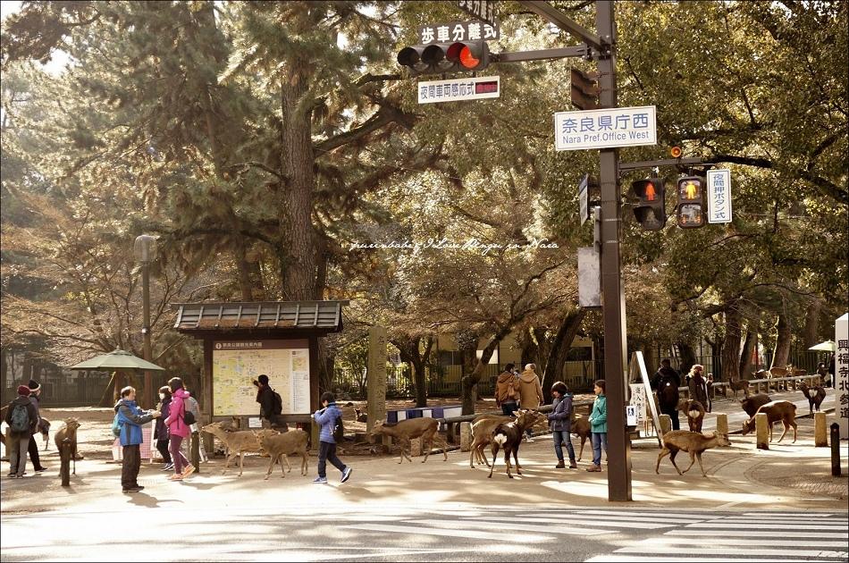 20小鹿群聚興福寺