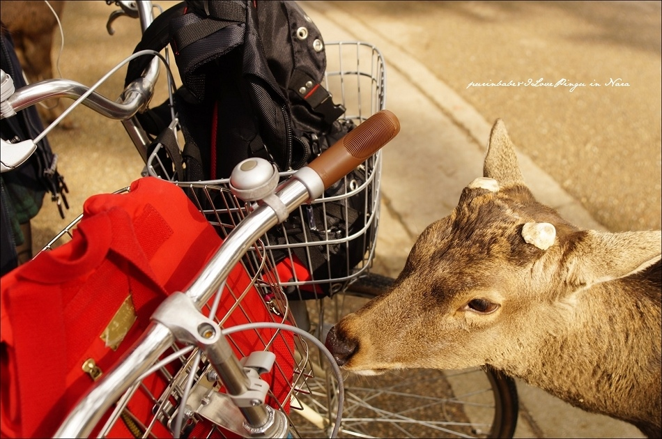 29攻擊自行車1