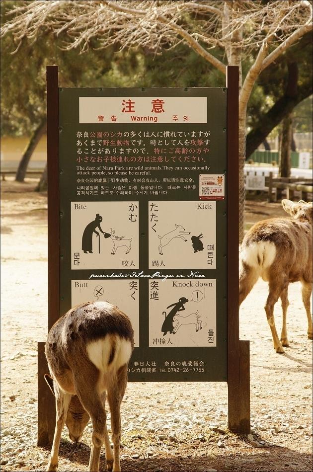 24小鹿告示