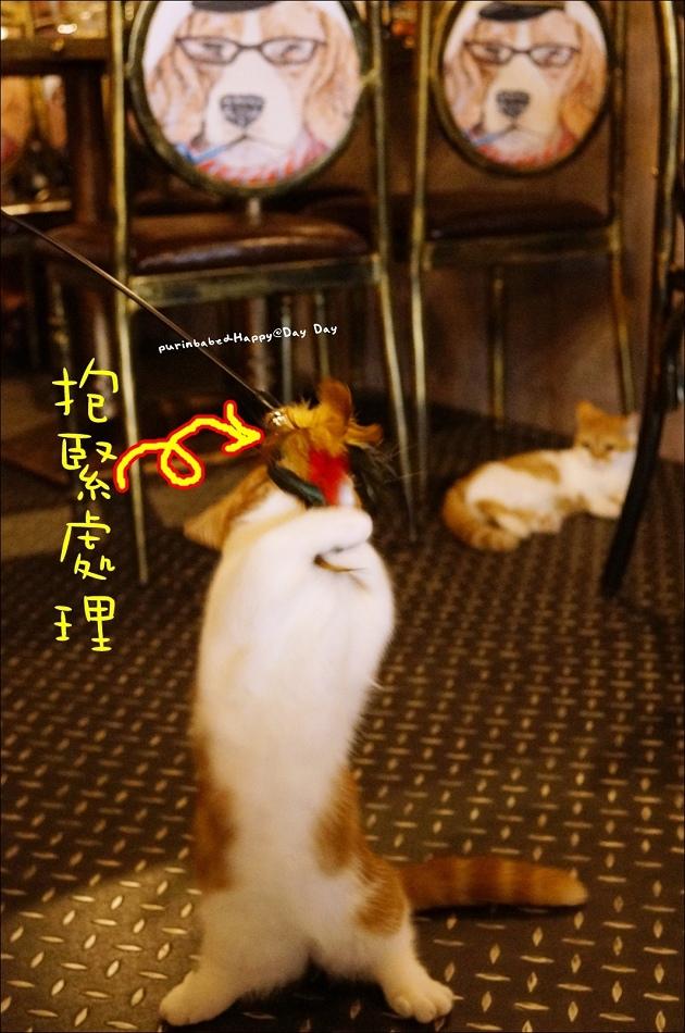 14逗貓4