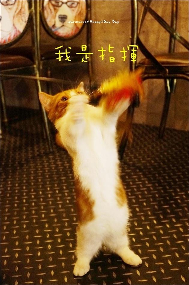 12逗貓2
