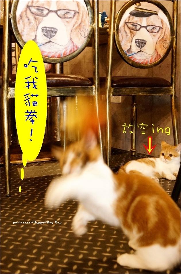 13逗貓3