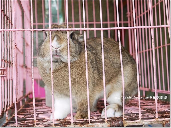 11兔子2.JPG