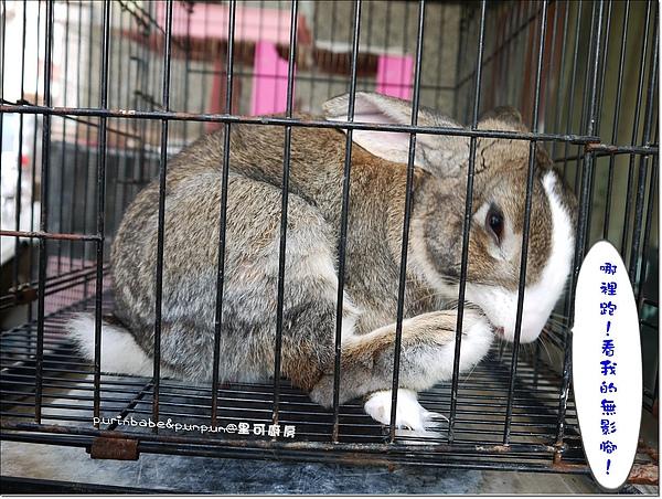 10兔子.JPG