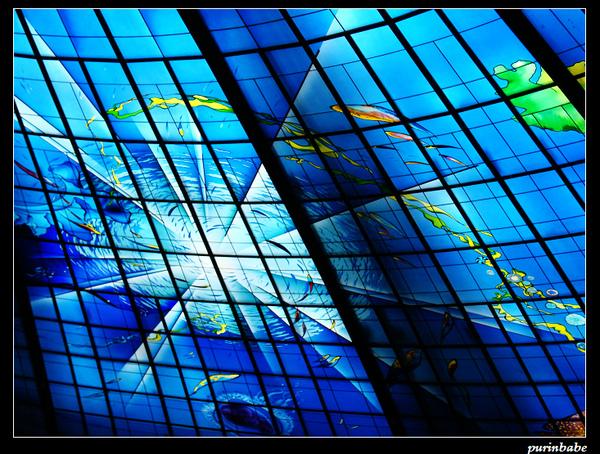 14海洋_nEO_IMG.jpg