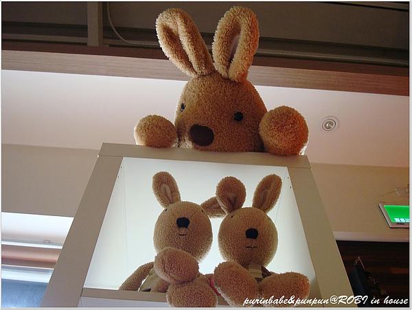 7說秘密的兔子.JPG