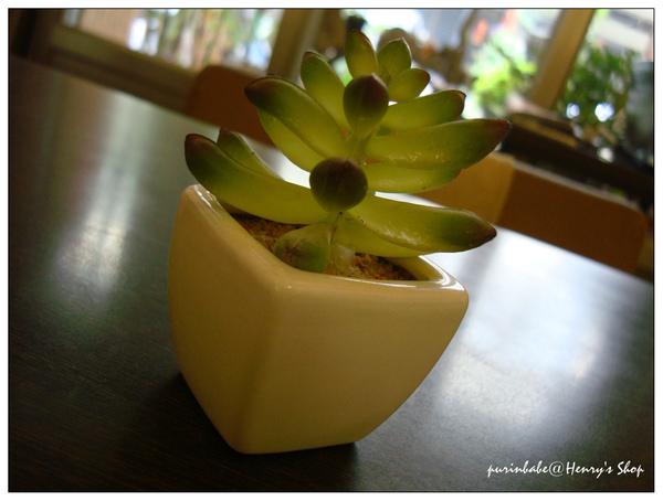 8桌上植物.jpg