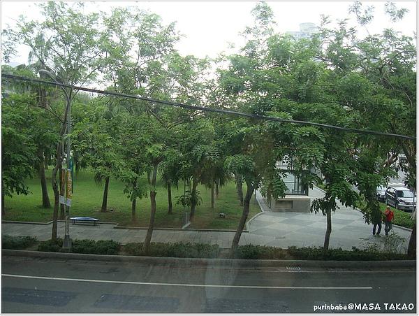 10我窗外的樹.JPG