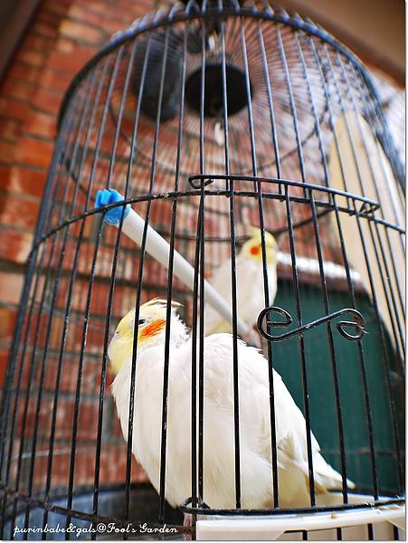 7鸚鵡.jpg