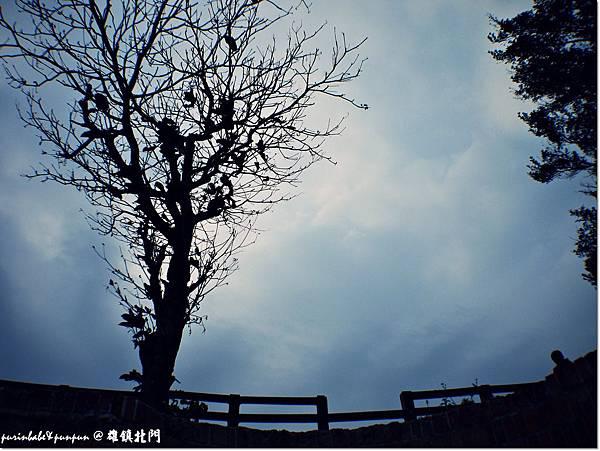 5枯樹.JPG