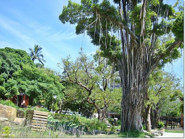 6大樹.jpg