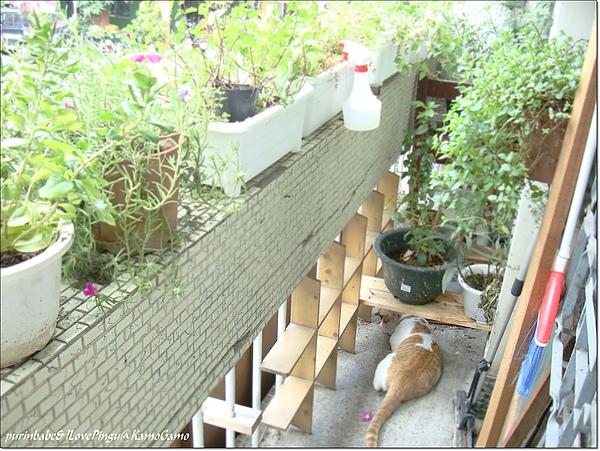 21陽台的小鴨.jpg
