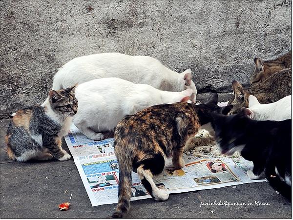15可憐貓咪.jpg