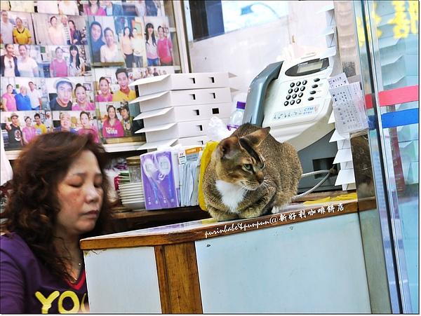 26老闆娘與貓.jpg