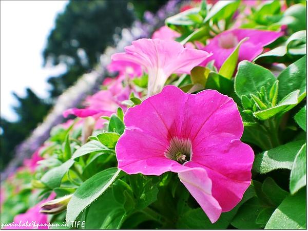 11花.jpg