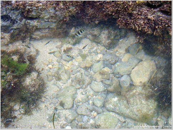 14熱帶魚.jpg