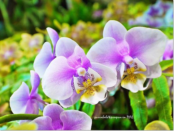 13蘭花2.jpg