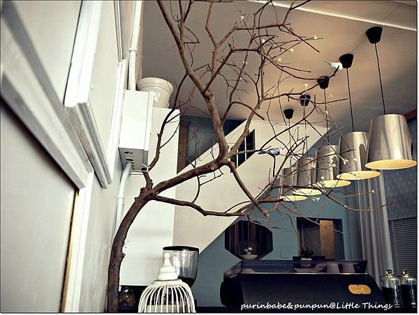 6一樓的樹.JPG