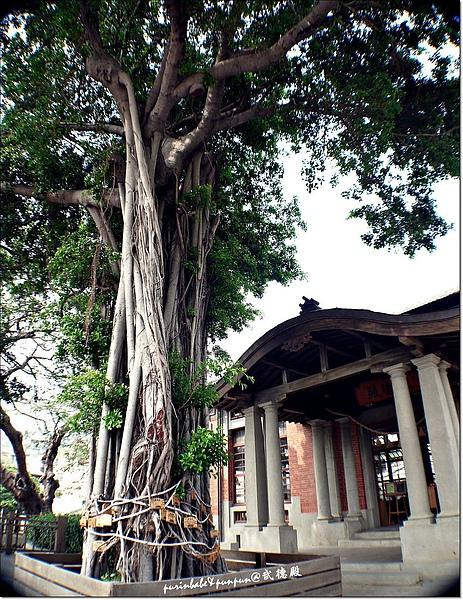 12祈願樹.JPG
