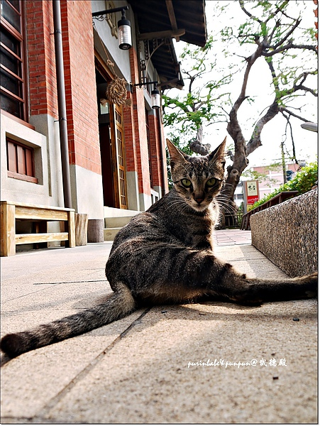 28貓3.JPG