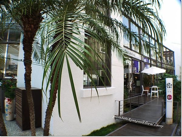 3椰子樹.jpg