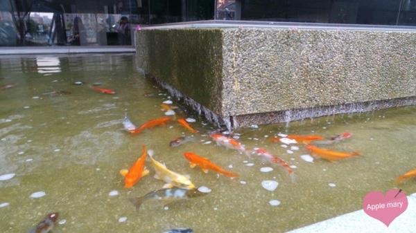 碳佐麻里(美術館旗艦店):看水上餐廳養著滿滿的魚