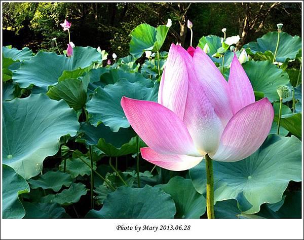 2013.06.28靜心湖-4.1.JPG