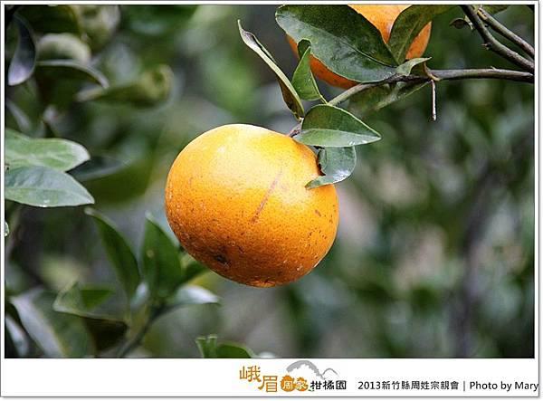 184-20131228峨眉周家柑橘園-周姓宗親活動.JPG