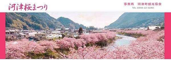 20160215kawadusakura02