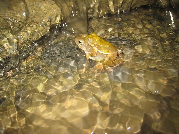 青蛙交配在涼山