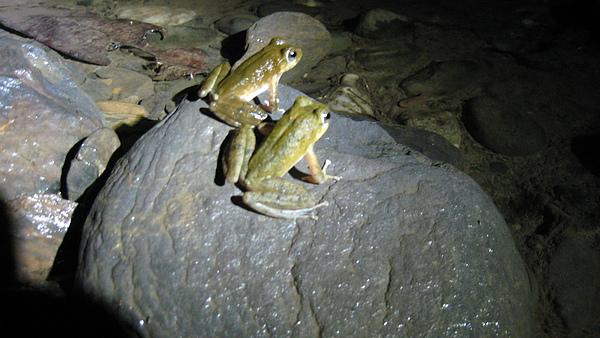 兩隻青蛙在涼山