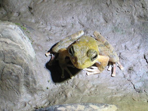 一隻青蛙在涼山