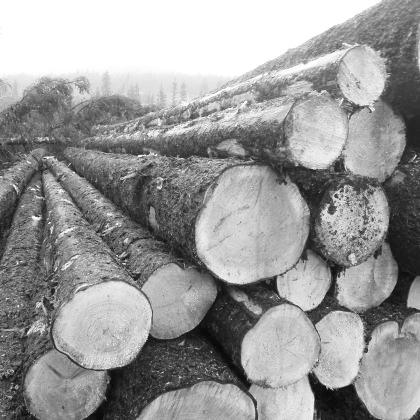 原料木材照片.jpg