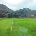 綠綠的田ㄦ