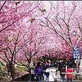 武陵農場賞櫻-02