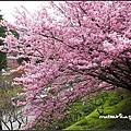武陵農場賞櫻-10