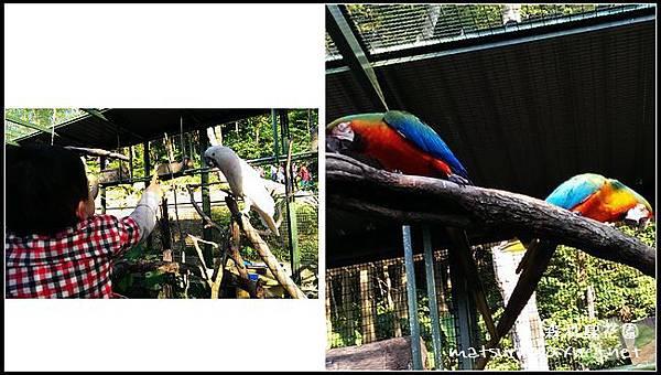 森林鳥花園_25.jpg