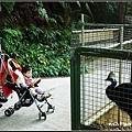 森林鳥花園_31.jpg