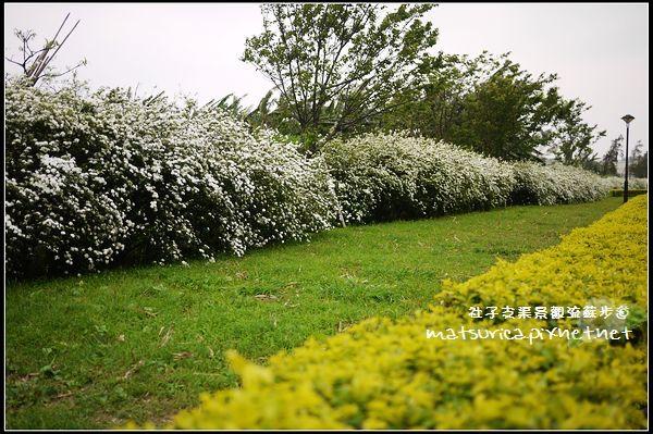 流蘇步道_09.jpg
