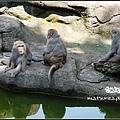 06_Taipei Zoo.jpg