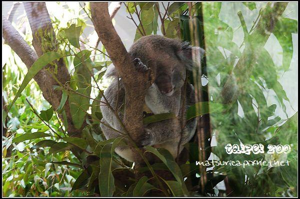 23_Taipei Zoo.jpg